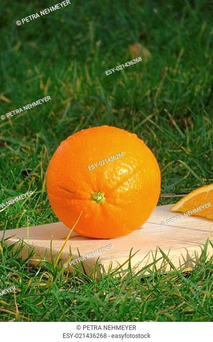 Apfelsine - Citrus sinensis