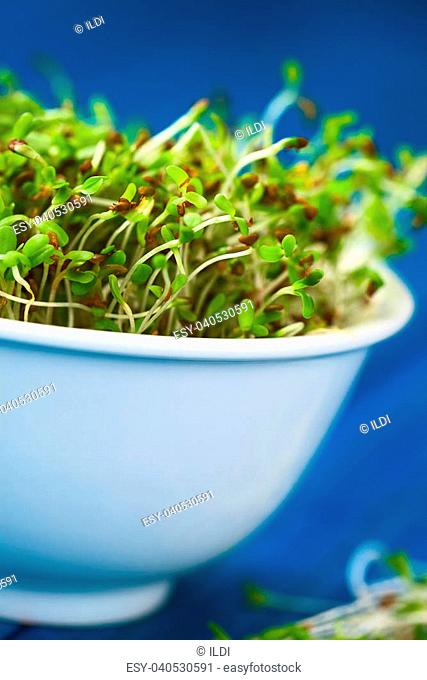 Sprouted alfalfa seeds in white bowl (Very Shallow Depth of Field, Focus on some of the sprouts in the front)
