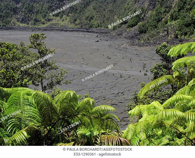 Looking down at Kilauea Crater, Kilauea Iki Trail, and ferns, Hawaii Volcanoes National Park, Hawaii, USA