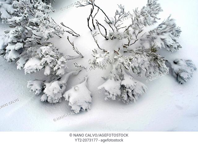 Snowy day in Peñalara Natural Park at the mountain range of Guadarrama, Spain