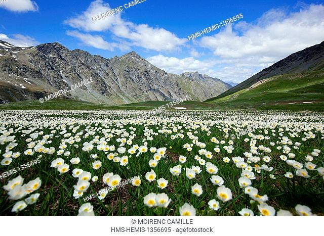 France, Hautes Alpes, Parc Naturel Regional du Queyras (Natural regional park of Queyras), Col Agnel 2744 m