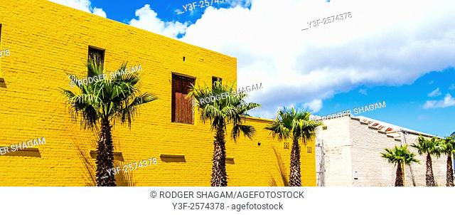 Urban palm tree and a yellow wall. Cape town, South Africa