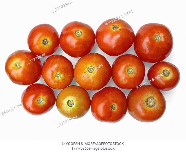 Tomatoes are arranged together in a group. Lycopersicon esculentum. Scientific classification. Kingdom: Plantae. Subkingdom: Tracheobionta