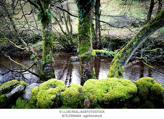 Closeup of wall with moss, trees and the River Wharfe. Yorkshire Dales, Skipton, England, UK, Europe