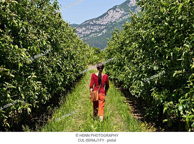 Rear view of woman strolling through pear orchard, Arco, Trentino, Italy