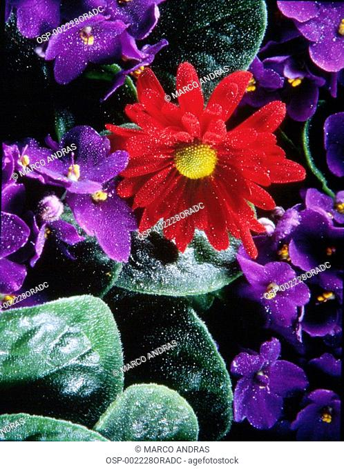 a red flower in teh purple flowers middle