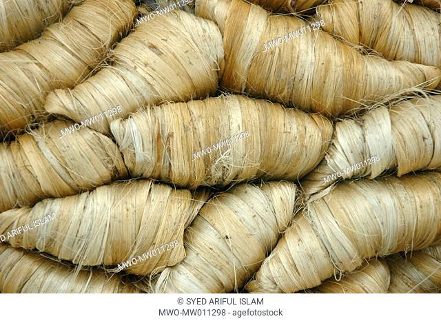 Jute, the golden fiber of Bangladesh Eighty percent of the world's high quality jute grows in Bangladesh Jute is used in making cloth, shawl, ropes