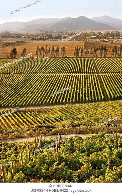 Indomita Vineyards, Chile
