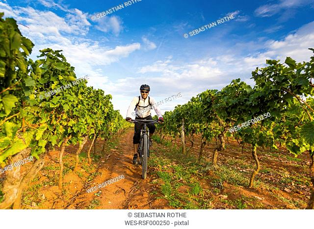 Croatia, Istria, Porec, mountainbiker driving through vineyard