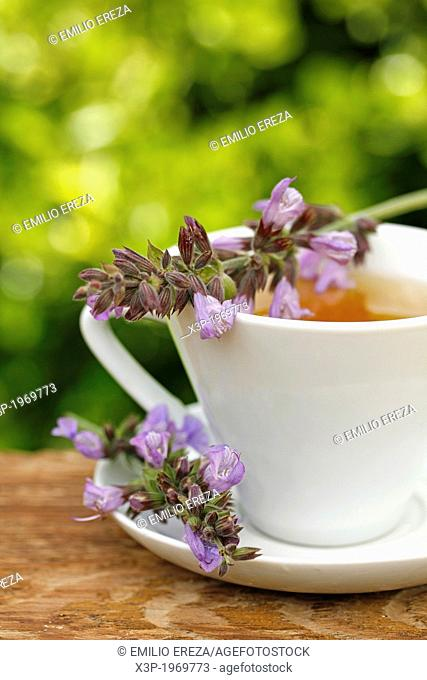 Sage infusion.Salvia officinalis