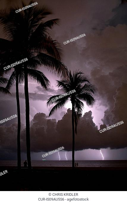 Lightning flashes offshore behind palm trees at the beach, Fort Lauderdale, Florida, USA