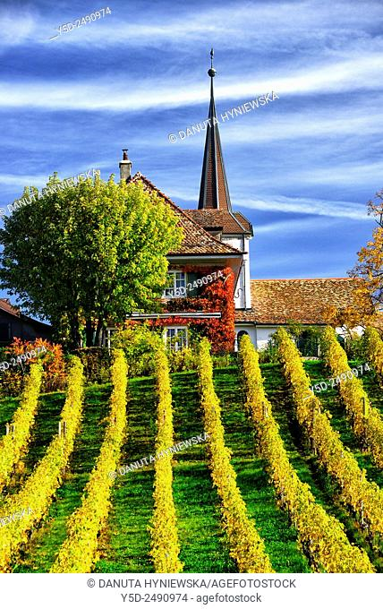 Europe, Switzerland, Canton Vaud, District Morges, Church in Fechy surrounded by vineyards in autumn