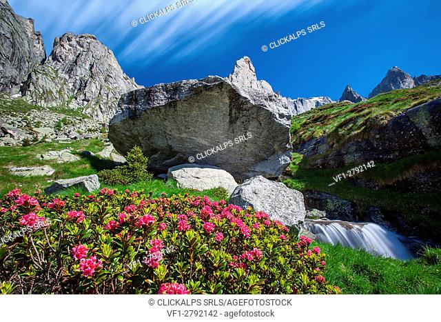 Postcard from Val Torrone with blooming rhododendrons, granite rocks and creek, Valmasino. Valtellina Lombardy Italy Europe