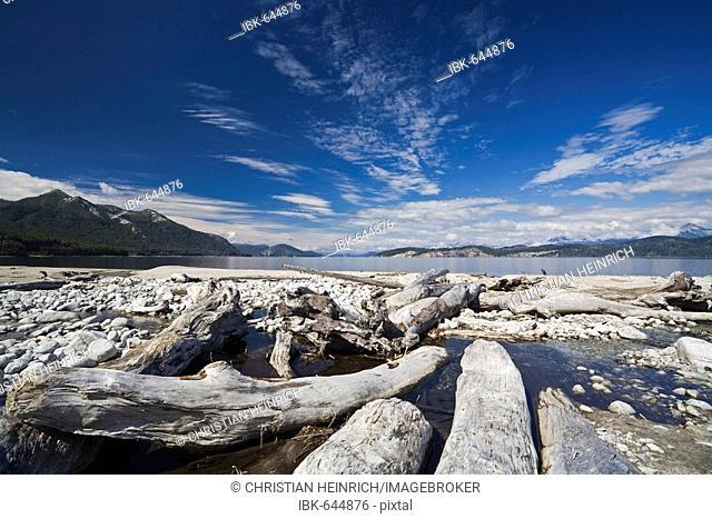 Trunks at the lake Nahuel Huapi, national park Parque Nacional Nahuel Huapi, lake region of northern Patagonia, Argentina, South America