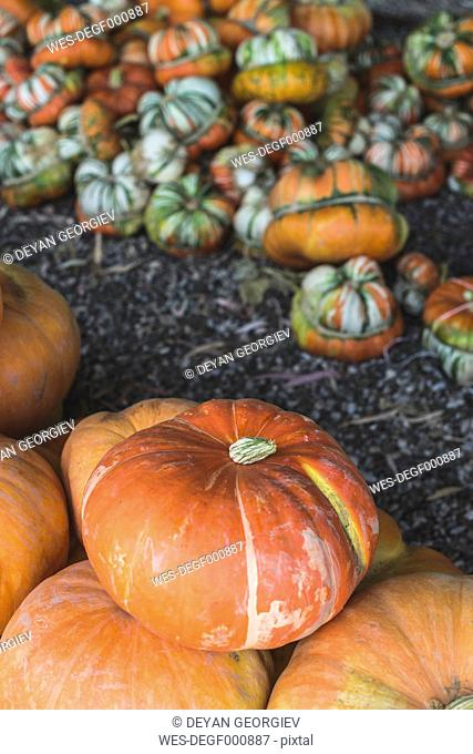 Pile of pumpkins on vegetable market