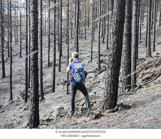 A tourist taking photos surrounded by charred trees a few days after huge forest fire in the mountain pine forests on Gran Canaria, Canary Islands, Spain