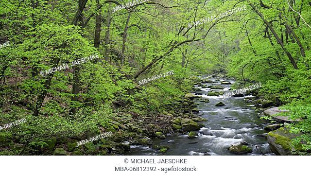 Spring in the Bodetal, Bode, Harz National Park, Saxony-Anhalt, Germany