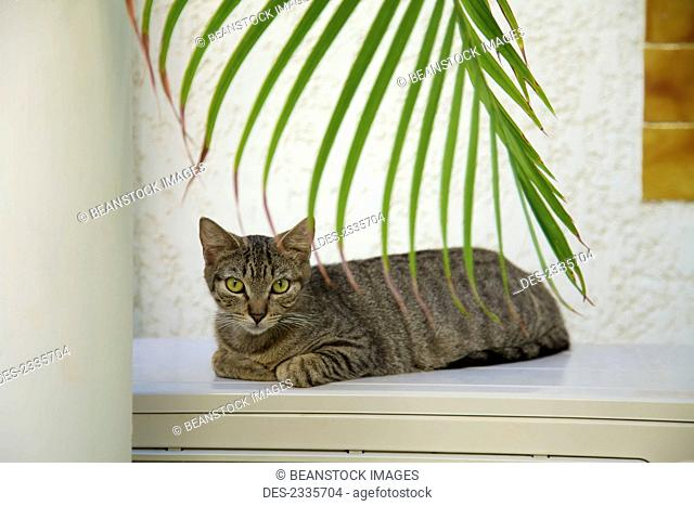 Cat sitting on a ledge; Cupecoy, St. Martin, French West Indies