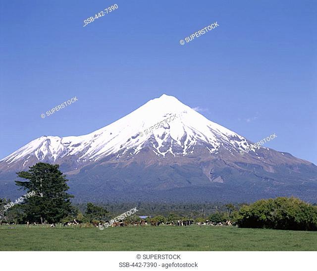 Mount Taranaki (Mount Egmont), Egmont National Park, Taranaki, North Island, New Zealand