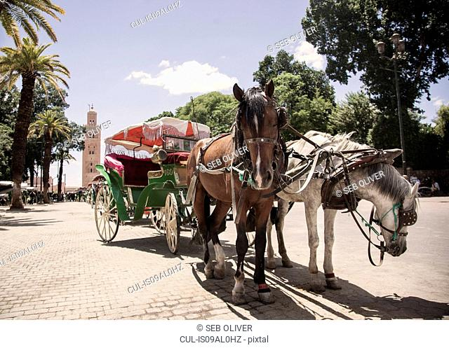 Tourist horses and carriage, Jamaa el Fna Square, Marrakech, Morocco