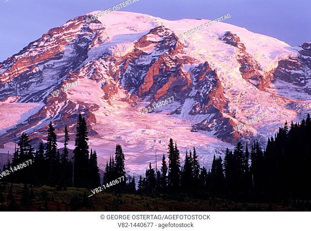 Mt Rainier, Mt Rainier National Park, WA