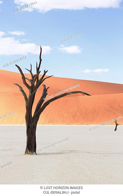 Dead tree on clay pan, Deaddvlei, Sossusvlei National Park, Namibia