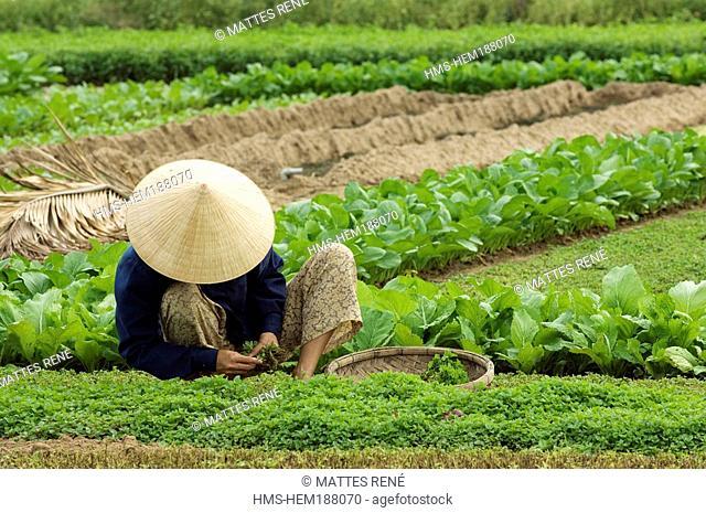Vietnam, Quang Nam province, Hoi An, Old town, Public gardens