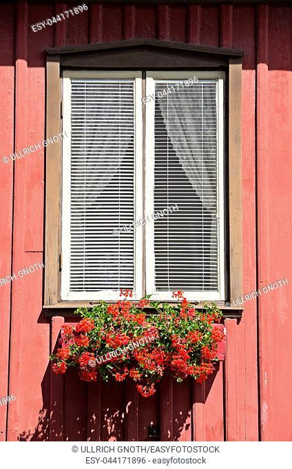 Red flowers in the window box, Lysekil, Bohuslan, Sweden. Rote Blumen in einem Blumenkasten am Fenster, Lysekil, Bohuslän, Schweden