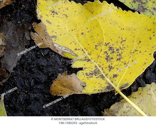 Yellow leaf on black tarmac