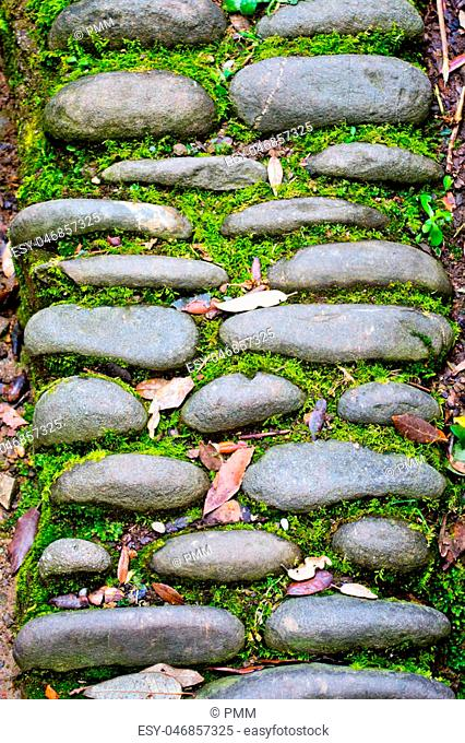 Ancient path in the wood with stones, herbs, lichens