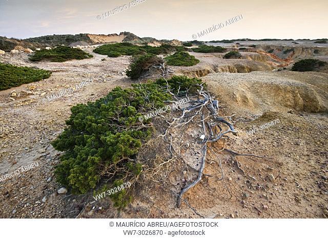 Flora of Carrapateira. Sudoeste Alentejano and Costa Vicentina Nature Park, the wildest atlantic coast in Europe. Portugal