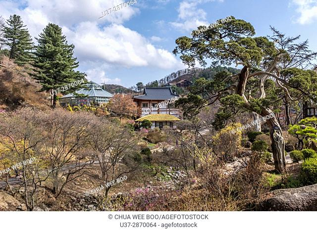 The trees and grounds of the Garden of the Morning Calm in Gapyeong, South Korea