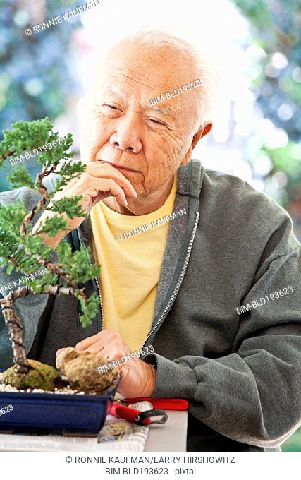 Senior Japanese man looking at bonsai tree