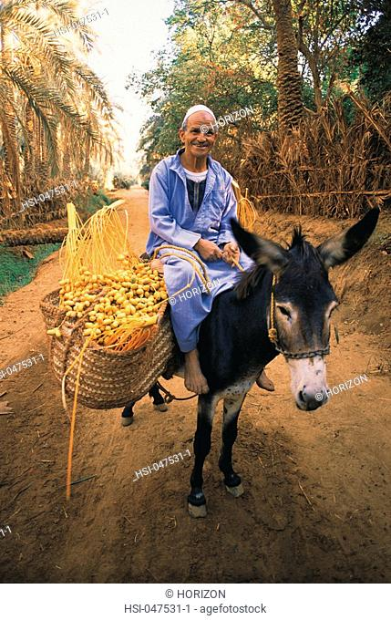 Travel, Egypt, Local date farmer on donkey