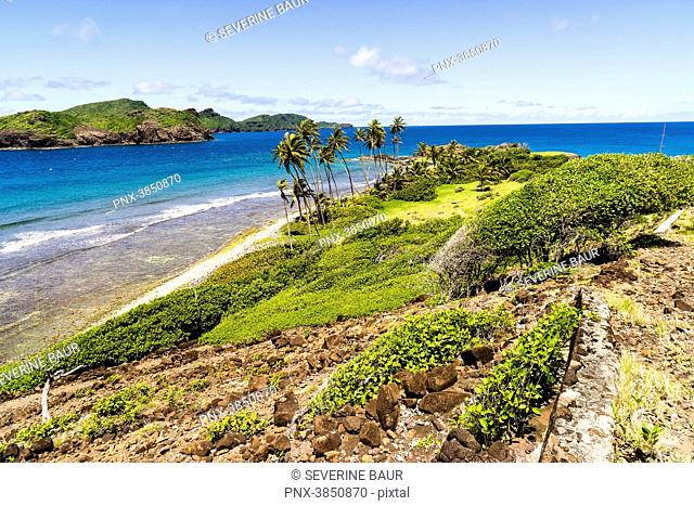 Landscape of coconut trees, rocks and sea, Petit Nevis, Saint-Vincent and the Grenadines, West Indies