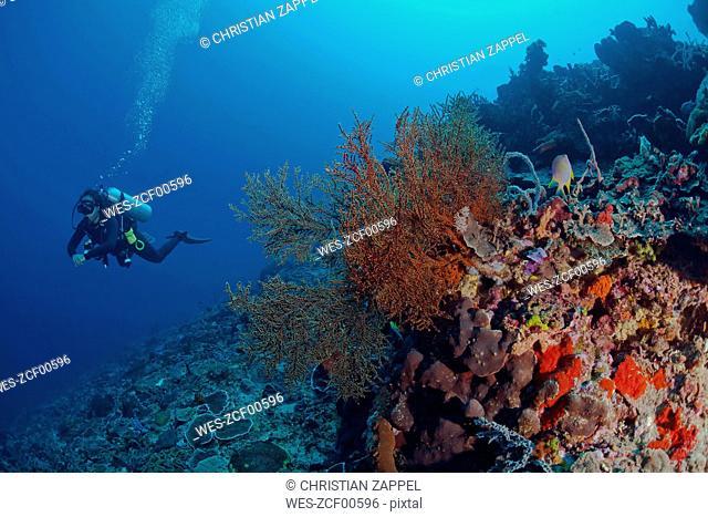 Indonesia, Bali, Nusa Lembonga, Nusa Penida, female diver at tropical coral reef