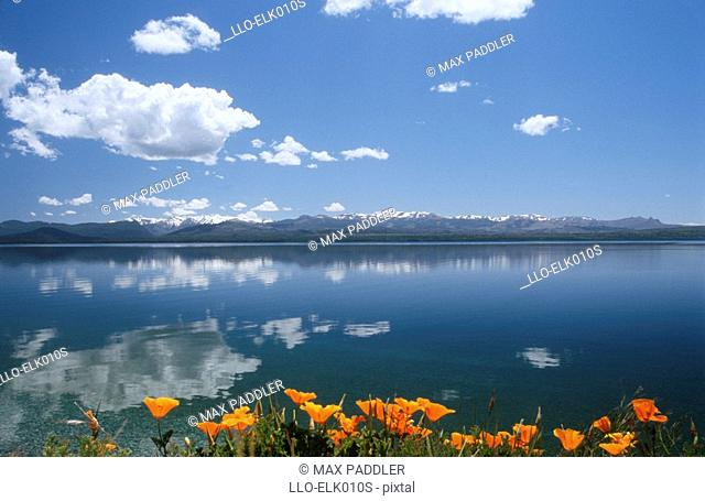 Scenic View of Snow-Capped Mountains Reflecting in the Lake with Orange Flowers in the Foreground  Lake Nahuel Huapi, Bariloche, Lake District, Argentina