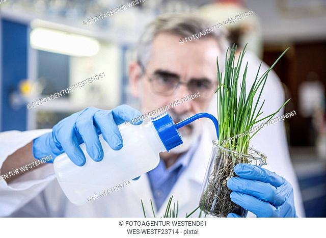 Scientist in lab watering plant