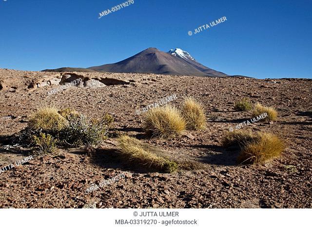 Bolivia, Los Lipez, Mirador Volcan Ollagüe