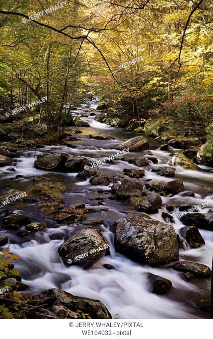 Autumn, Tremont, Great Smoky Mountains National Park, TN