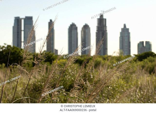 Skyscrapers arise behind field