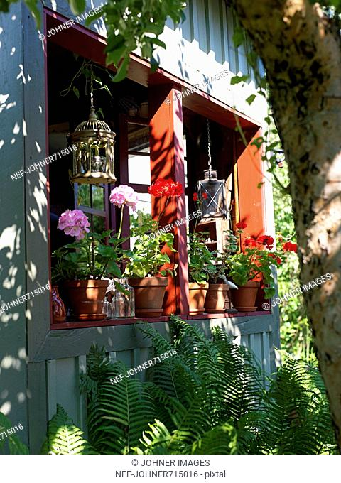 Flowerpots in a window, Sweden