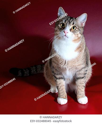Tabby cat with green eyes lying on red background