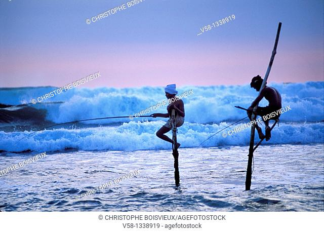 Stilt fishermen at dusk, Weligama region, Sri Lanka