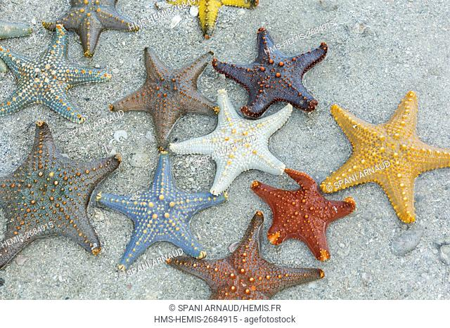 Tanzania, Zanzibar, Chapwani, low tide Starfish