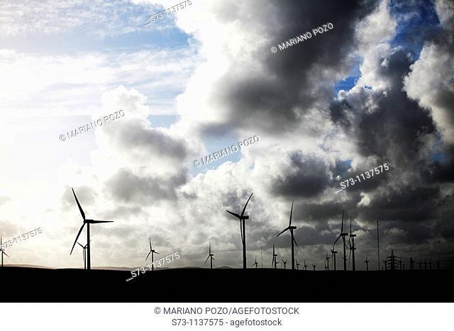 Eolic power, Tarifa. Cádiz province. Andalucia. Spain