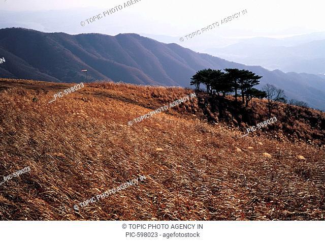 Field Of Reeds,Gyeonggi,Korea