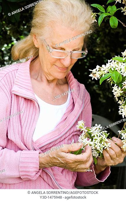 Senior woman looking at jasmine plant in the garden