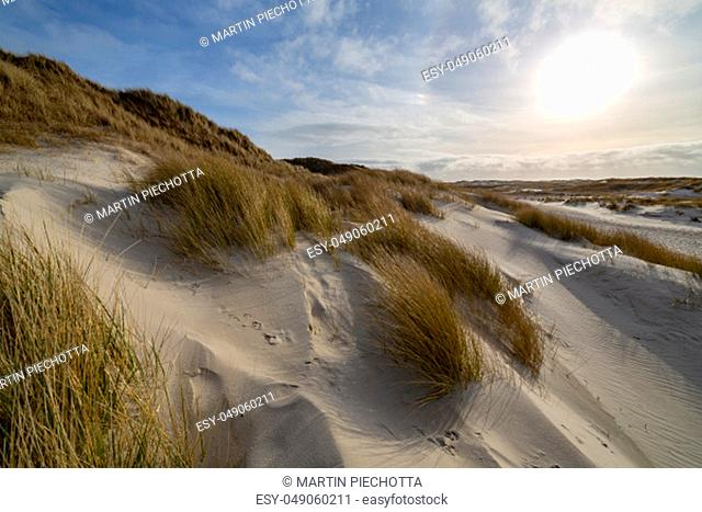 Hardy marram grass on pristine white sand dunes backlit by a hazy sun in an idyllic scenic landscape on Amrum, North Frisia