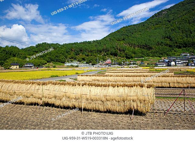 Japan, Chubu Region, Koshinnetsu Region, Nagano Prefecture, Nagano City, View of field